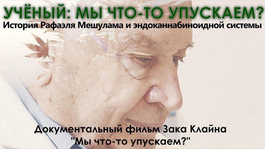 Кусты элитной конопли, стоимостью около 1 млн грн, изъяты у жителя Николаевщины, - Нацполиция - Цензор.НЕТ 5034